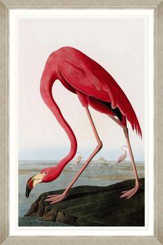 Flamingo by John James Audubon Framed Graphic Art Audubon Prints, Audubon Birds, Flamingo Painting, Flamingo Art, Pink Flamingos, Painting Prints, Fine Art Prints, Canvas Prints, Paintings
