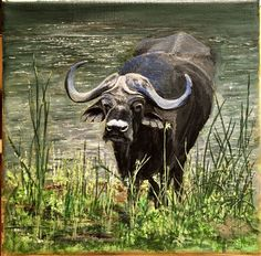 Pencil Drawings, Painting & Drawing, Cow, Moose Art, Paintings, Animals, Animales, Paint, Animaux