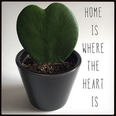 home is where the heart is.    #green #heart #home #plant