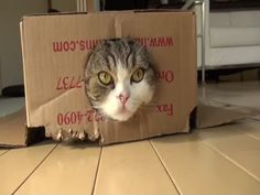 Hahaaa... MUST WATCH,,. This Cat is a True Individual!!! ((kitty kitten funny silly lol))
