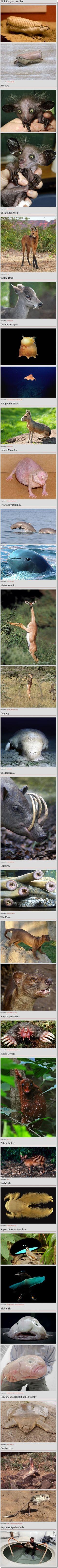Just adding to my knowledge of strange animals :)