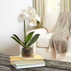 Orchids in Glass Jars #orchids #farmhouse #farmhousedecor #rustic #flowers #glass #indoorplants #orchids #jars #homedecor #diydecor #affilaite #ss