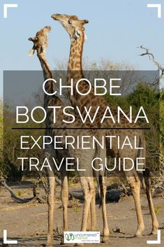A guide to experiencing the best of Chobe National Park in Botswana. 20 top experiences + practical tips for your trip to Africa. Travel Tours, Travel Advice, Travel Guide, Chobe National Park, National Parks, Africa Destinations, Travel Destinations, African Holidays, Experiential