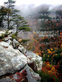 Located on the western edge of Lookout Mountain, Cloudland Canyon is one of the most scenic parks in Georgia, offering rugged geology and exceptional hiking.  The park straddles a deep gorge cut into the mountain by Sitton Gulch Creek, and elevation differs from 800 to 1,980 feet.  Overnight guests can choose from new yurts, cottages near the canyon edge, a modern campground and spacious, walk-in tent sites.  Backpackers can enjoy camping in a hemlock grove on the 2-mile Backcountry Loop.