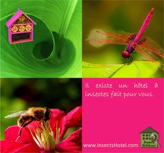 Hôtels à insectes #insectes #InsectHotel #insecte #nature #biologie #animal #animaux #faune www.InsectsHotel.com