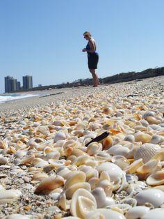 Seashell hunting at MacArthur Beach, West Palm Beach, Florida.