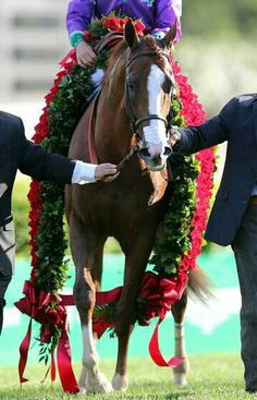California Chrome with the Derby roses.  He arrived at Pimlico today 5/12/14 to prepare for the Preakness.