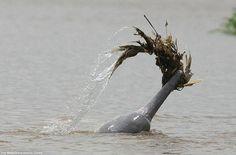 Самые удивительные факты о дельфинах (20 фото)