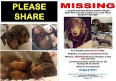 plz tweet 4 Richie STOLEN miniature dachshund pup #Carlton #FY6 #HelpFindThem pic.twitter.com/KDAaupSdsW