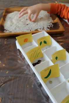 Science experiments, art, creating, and exploring seed activities for kids! Gardening with kids starts with the seeds - here are some awesome activities! Seed Activities For Kids, Letter S Activities, Spring Activities, Kindergarten Activities, Preschool Garden, Preschool Science, Montessori Science, Science Activities, Preschool Ideas