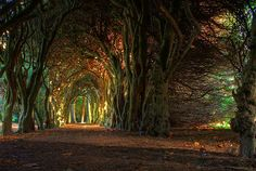 fairy tale tree tunnel.  Woods in Gormanston College, Co. Meath, Ireland