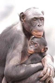 Bonobos by Marian Brickner