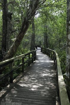 8 Incredible Hikes Under 5 Miles Everyone In Florida Should Take