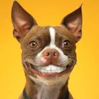 Febuary is Dental Health Month!! Call ahead and schedule your pet's dental cleaning during the month of Febuary and receive 10% off. For a customized estimate call today to schedule your pets free dental exam! #NorthwoodsVeterinaryHospital #SpiritLakeAreaChamberofCommerce