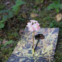 Primrose in Autumn