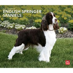 For the Love of English Springer Spaniels Wall Calendar: Full of love and devotion, English Springer Spaniels are wonderful dogs. Smart, agile, and possessing an exceptional memory, they like nothing more than flushing birds for their appreciative and admiring hunting partners.  www.calendars.com...