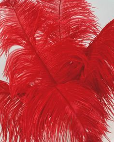 These are red ostrich feathers. Curley's wife wears when she claims she's looking for Curley when she really wants attention and somebody to talk to. Save On Crafts, Of Mice And Men, Ostrich Feathers, Red, Wedding, Valentines Day Weddings, Weddings, Marriage, Chartreuse Wedding