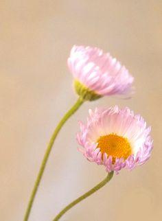 Simple, yet elegant... Two delicate wildflowers