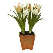 Narcissus Pot