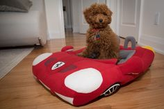 Teddy's Ferrari dog bed is everything - he is one fast pup.