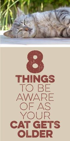 Cat behavior guide cat body language rolling over,cats talking to each other translation do cats talk to each other,what do cats actions mean what is body language. Cat Care Tips, Pet Care, Pet Tips, Cat Info, Gatos Cats, Cat Behavior, Cat Facts, Cat Health, Diy Photo