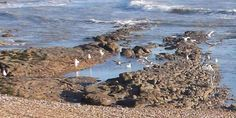 """""""Our local beach at low tide. South East England, East Sussex, Twitter, Beach, Outdoor, Outdoors, The Beach, Beaches, Outdoor Games"""