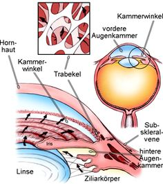 Glaukom - Grüner Star - via Pinterest