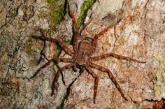 National Geographic - Scientists Discover Flying Spiders Steer in Mid-Air