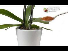 Echa 1 cucharada de CANELA en POLVO en el tallo de tus PLANTAS y mira lo que pasa - YouTube
