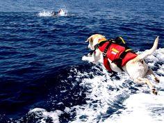 Noi in vacanza, i cani bagnino al lavoro per proteggerci. Ecco il bilancio Sics…