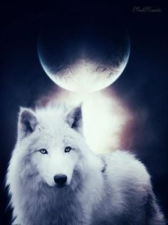 beautiful wolf and moon pictures Artwork Lobo, Wolf Artwork, Wolf Photos, Wolf Pictures, Wolf Love, Beautiful Wolves, Animals Beautiful, Tier Wolf, Wolf Hybrid