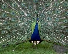 pictures of birds - Google Search