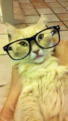 Meow prrr here kitty lesbian - 3 2