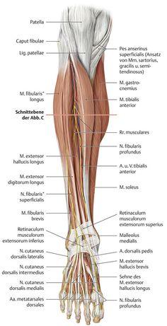 spine anatomy | spinal-cord-anatomy-diagram-en / spinal-cord ...