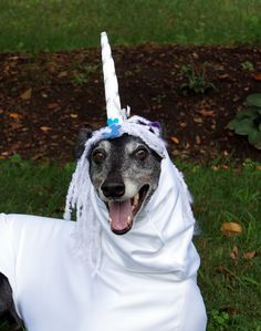 Unicorn Costume - to be custom-made for your greyhound or other large dog