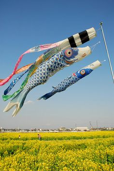 こいのぼり Koinobori (Streaming Carp Flag), Children's Day (Kodomonohi), May Japan Japanese Culture, Japanese Art, Carpe Coi, All About Japan, Blowin' In The Wind, Go Fly A Kite, Koi Carp, Foto Art, Dibujo