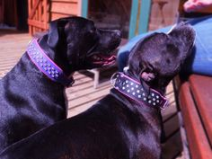 Lara in Violet on Bright Pink and Lexie in Black on Pink 3 row Natural Crystal collars