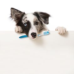 This DIY toothpaste is a perfect at keeping your dogs breath fresh, their gums healthy and simple enough without any unnecessary chemicals or ingredients.