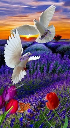 Beautiful Love Pictures Beautiful Sites Love Images Beautiful Places To Visit Beautiful Scenery Beautiful Landscapes Wild Flower Meadow Love Wallpaper Beautiful Butterflies Beautiful Nature Pictures, Beautiful Nature Wallpaper, Beautiful Moon, Beautiful Sites, Amazing Nature, Beautiful Landscapes, Pretty Birds, Beautiful Butterflies, Beautiful Flowers