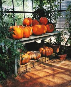 All kinds of pumpkins on display during Autumn months at Babylonstoren, South Africa. 🍁 Take a stroll through our fruit and vegetable garden or sit down for a pumpkin-inspired meal at one of our restuarants. Greenhouse Restaurant, Pumpkin Display, Veg Patch, Picnic Style, Greenhouse Gardening, Garden Structures, A Pumpkin, Growing Plants, Fruits And Vegetables