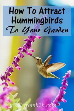 How to Attract Hummingbirds To Your Garden | Want to attract hummingbirds to your garden? Find out how to provide the food, water and shelter that will get these pretty birds to visit your yard.