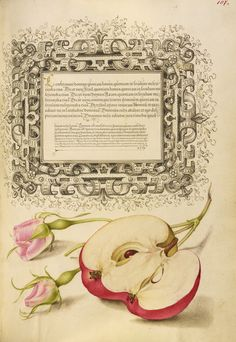 French Rose and Apple (1561-1562). Watercolour, gold and silver paint, and ink on parchment by Joris Hoefnagel (Flemish / Hungarian, 1542 - 1600) and Georg Bocskay (Hungarian, died 1575). Image and...