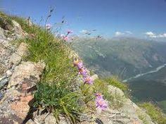 Картинки по запросу горы кавказа