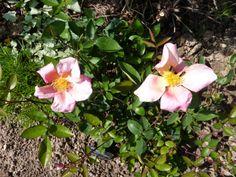 le jardin de marianne: petite balade à la prairie