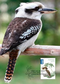 Kookaburra Bird Embroidery, Embroidery Ideas, Vintage Embroidery, Funny Bird Pictures, Black Bird Tattoo, Bird Graphic, Bird Silhouette, Australian Animals, Bird Drawings