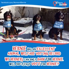 Cast you #Vote4Bernie in support of your pets