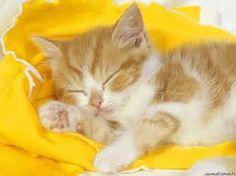 Chat qui dort.