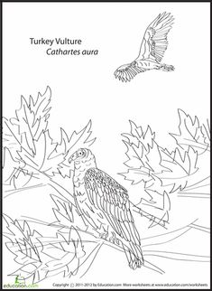 Take Flight With Your Budding Bird Watcher Learn A Few New Species As You Add Colors To These Feathered Friends
