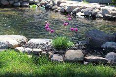 How To Build A Pond - Backyard Water Garden Backyard Water Feature, Ponds Backyard, Backyard Waterfalls, Pond Landscaping, Landscaping With Rocks, Fish Pond Gardens, Small Gardens, Garden Pond Design, Landscape Design