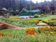 Botanical Garden is one of the major tourist attractions of Ooty, Tamil Nadu.Read more for Botanical Garden History, Timings and best time to visit in Ooty, India. Best Places To Travel, Places To Visit, Honeymoon Tour Packages, Ooty, Picnic Spot, Hill Station, Garden Pictures, The Beautiful Country, Tourist Places